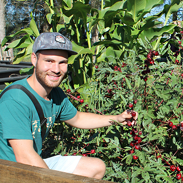 Sustainability student Jan Albers with a rosella plant in the USC Moving Feast garden