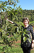 USC Business PhD student Sherrill Cooper conducting research on an avocado farm at Bellthorpe, west of Peachester