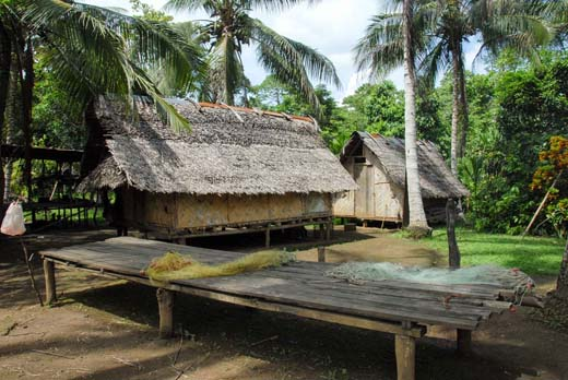 Homes in a Papuan New Guinea forest