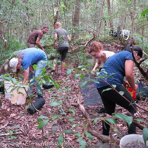 USC Ecology students on a recent field trip to Noosa National Park.