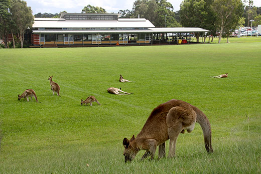 Uni club with kangaroos out front