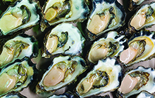 Sydney rock oysters (Image by Wayne O'Connor of the NSW Department of Primary Industries)