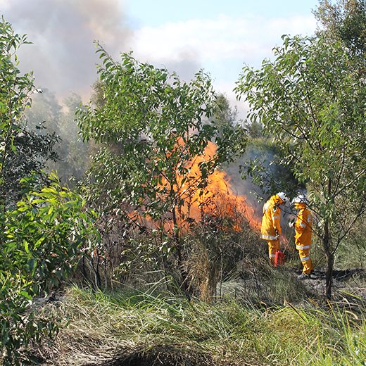 Fire fighters stage a controlled burn of USC's compensatory habitat