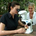 South African researcher joins USC battle to beat gum tree pest