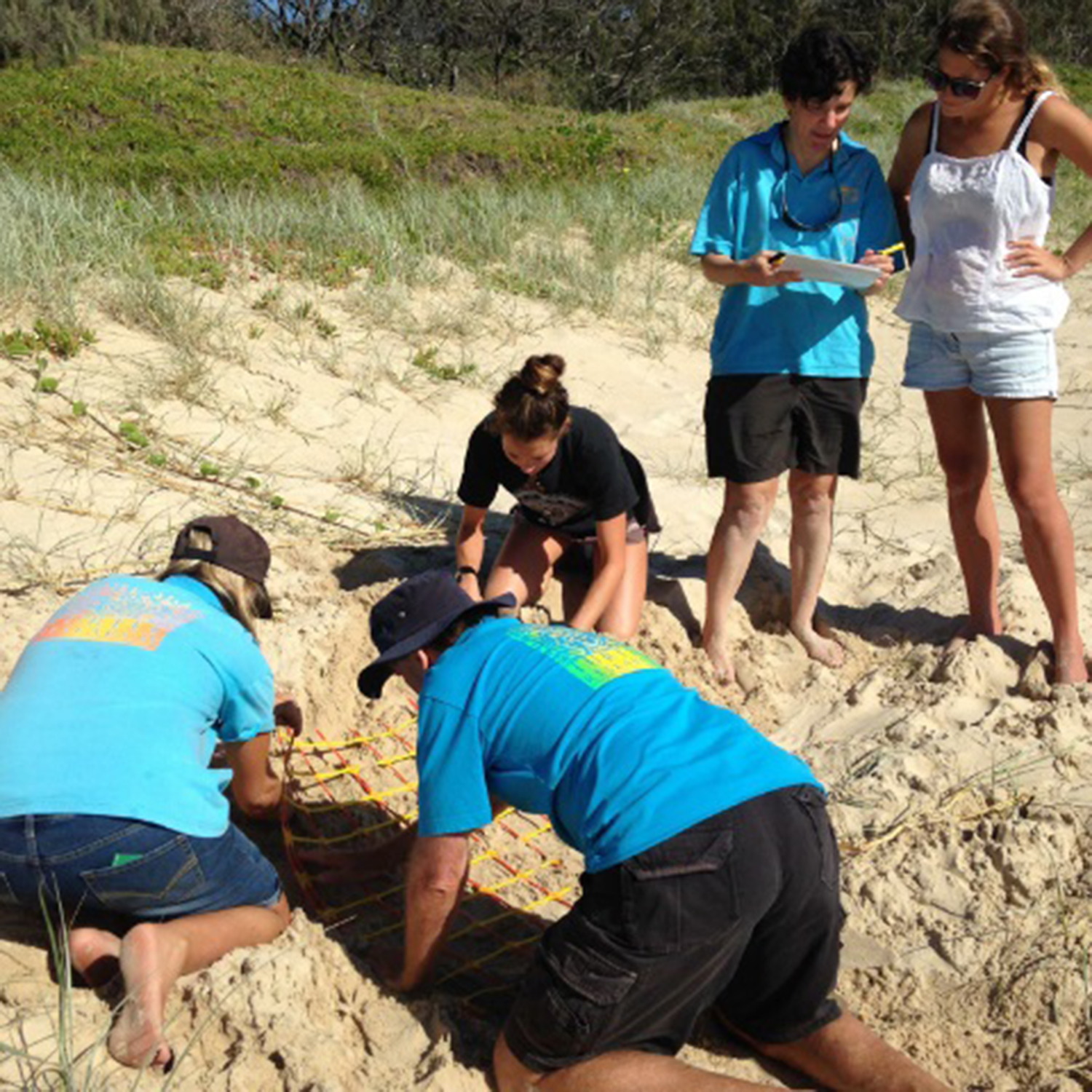 USC graduate Ilana Kelly doing fieldwork at a nesting site with volunteers from Coolum & North Shore Coast Care.