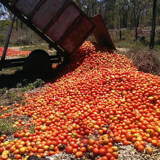 Dumped tomatoes