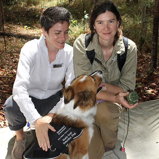 Dr Celine Frere and Dr Romane Cristescu with detection dog 'Baxter'.