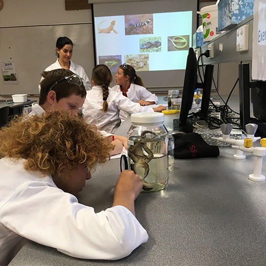 School students conduct animal ecology investigations in USC Fraser Coast's science labs as part of Explore Expo.