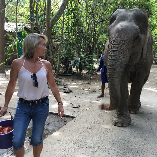 Dr Jane Stephens walking with rescued elephant in Thailand