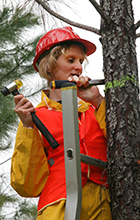Helen Nahrung takes a core sample from pine tree in Beerburrum